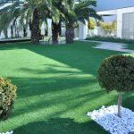 שחפופיה דשא ירוק