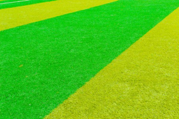 שחפופיה- דשא סנטטי צבעים